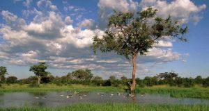 Imagem reflorestamento Biosev recuperação ambiental