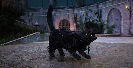 Black Desert Campo de batalha vermelho  gato