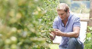Banner da BASF Fazenda de tomate e um jovem pegando o fruto