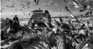 Revoada fotografada por Luiz Moreira
