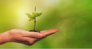 Muda de planta na palma da mão