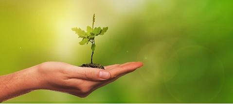 Muda de planta na palma da mão preservação do meio ambiente