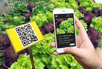Smartphone Qrcode e horta ação das agtechs