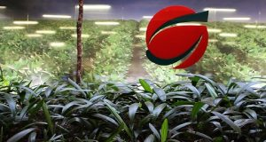 Logomarca da Belagrícola com uma horta ao fundo