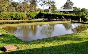 Lago com peixes Aquicultura