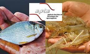 Peixe curso de aquicultura