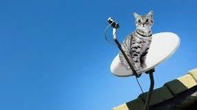 Gato nas antena pParabolica decodificadores piratas
