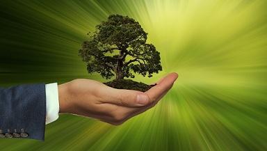 Árvore na palma da mão aproveitamento Resíduos