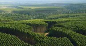 Floresta gerenciamento florestal
